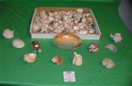 Large collection of sea shells and sea shell art