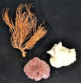 Two Pieces of coral and a large conk shell