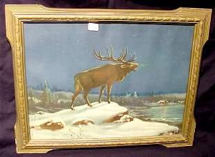 Lone Moose print