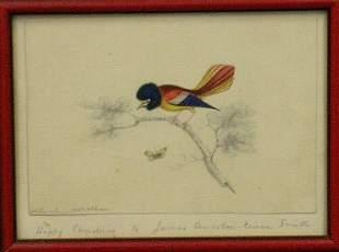 Kieran Smith American, 19th century BIRD ON A BRA