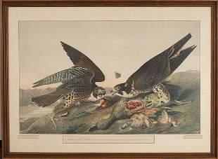 After John James Audubon GREAT FOOTED HAWK Chromo