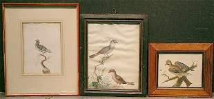 Asian School 19th/20th century BIRDS ON BRANCHES
