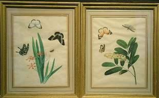 Indian School 19th Century STUDIES OF BUTTERFLIES
