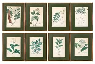 Maxim Gauci, lithographer [PLANT STUDIES] Eight