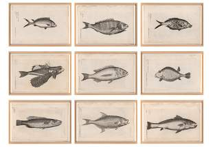 Francis Willoughby [FISH STUDIES] Nine engravings from
