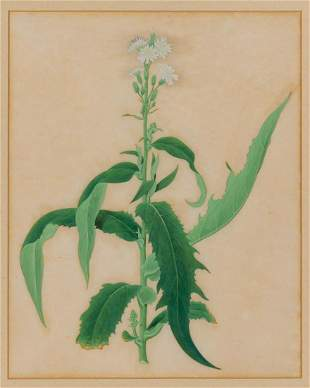 Chinese School 18th-19th Century White Flowers on a
