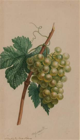 Attributed to Michel van Huysum A Bunch of Grapes