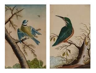 English School 18th Century Kingfisher and Blue