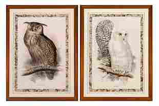 Edward Lear EAGLE OWL; SNOWY OWL Two hand-colored