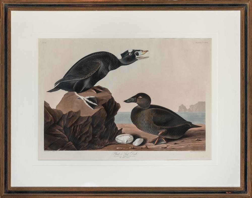 After James James Audubon BLACK, OR SURF DUCK