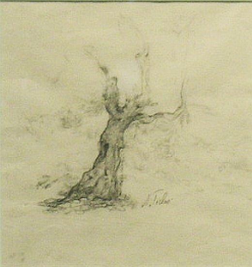 16: Anna Ticho Israeli, 1894-1980 OLD TREE