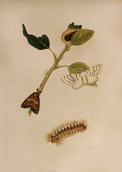 4018: DONOVAN, EDWARD, The Natural History of British I
