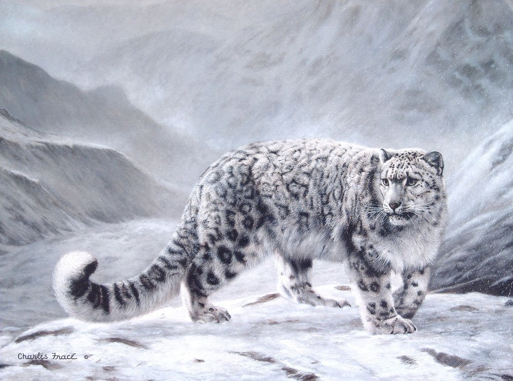 GICLEE Charles Frace FLEETING ENCOUNTER Snow Leopard