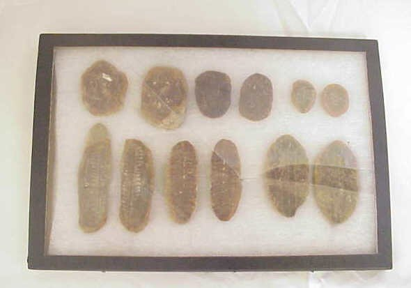 7: Group of leaf fossils in case.