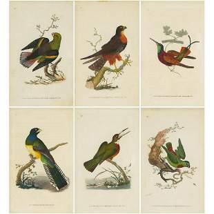 Edward Donovan (Irish, 1768-1837), SIX AVIAN PLATES,