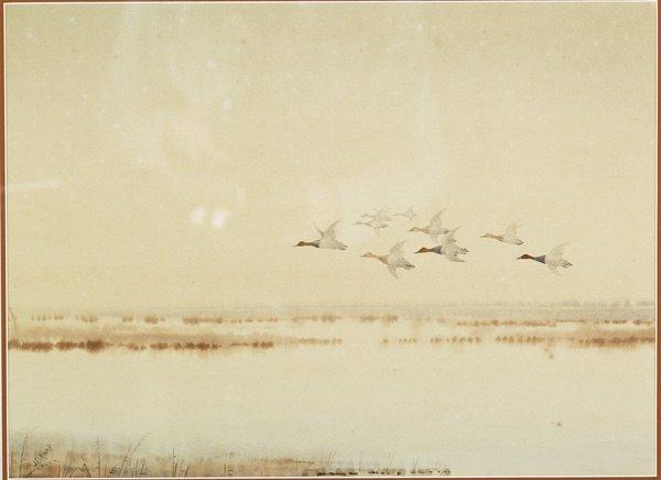 6: American, Joseph Day Knap (1875-1962), MALLARDS