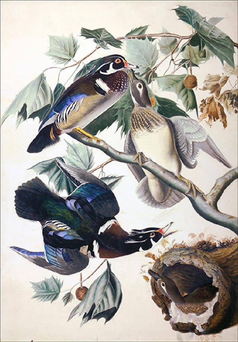 After John James Audubon (American, 1785-1851) Summer