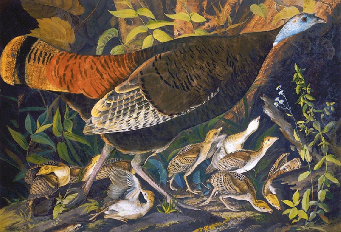 After John James Audubon (American, 1785-1851) Wild