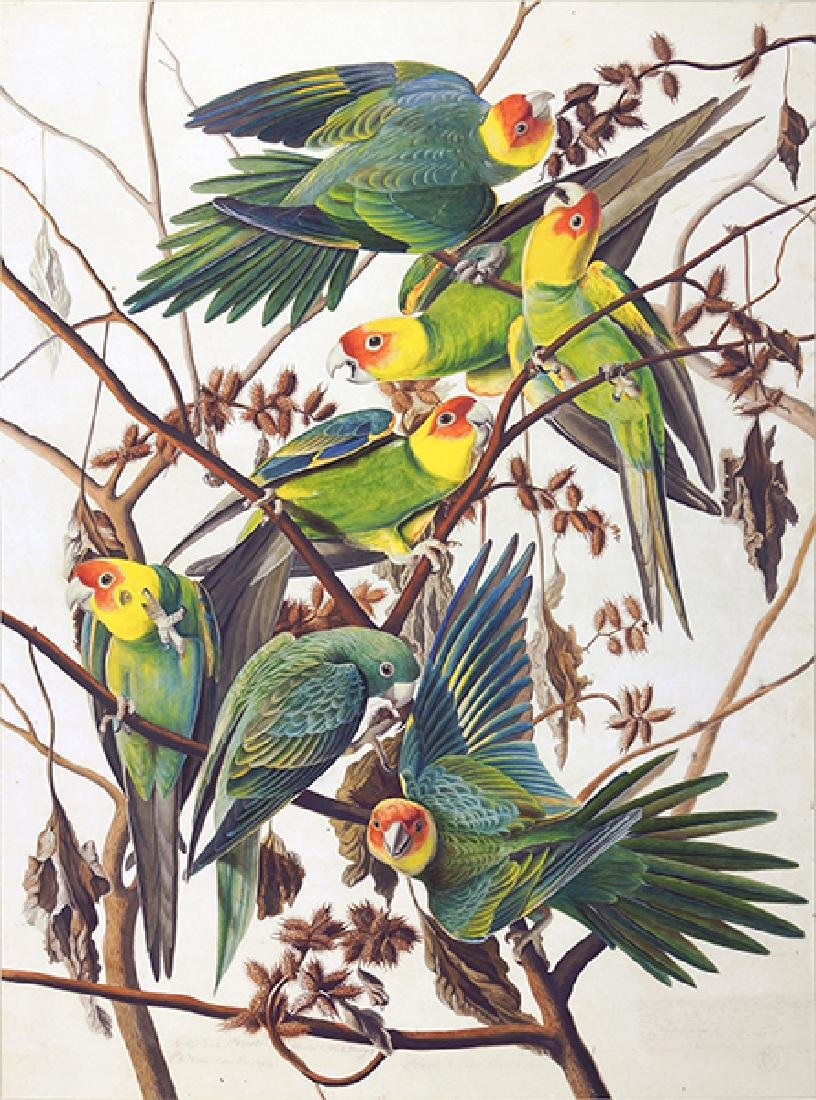 After John James Audubon (American, 1785-1851) Carolina