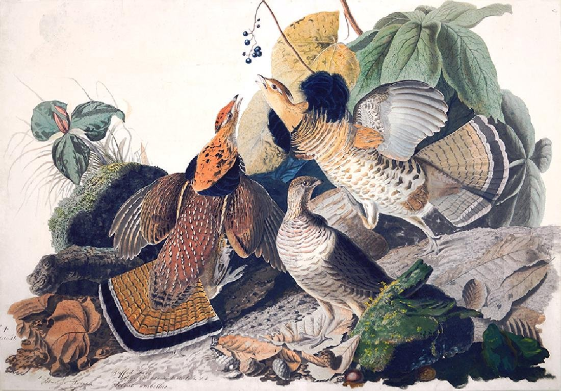 After John James Audubon (American, 1785-1851) Ruffed