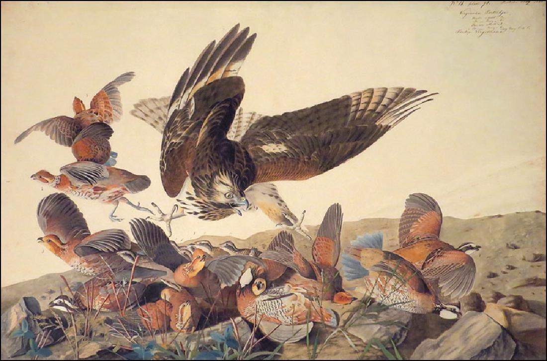 After John James Audubon (American, 1785-1851) Virginia
