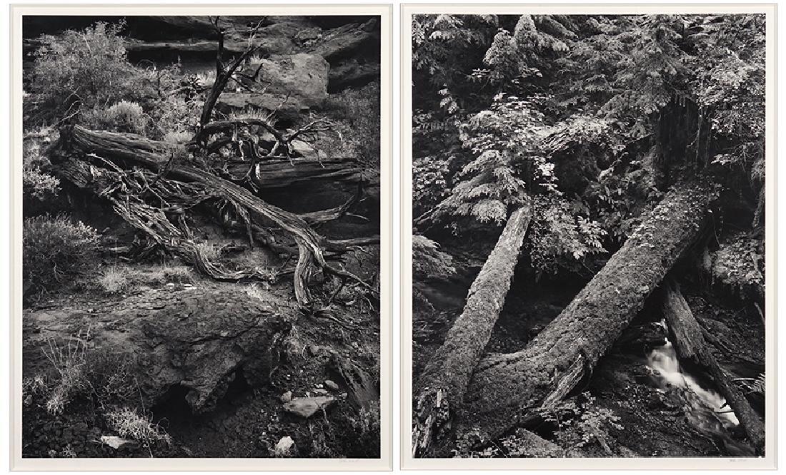 John Ward (American, B. 1943) Fallen Trees.