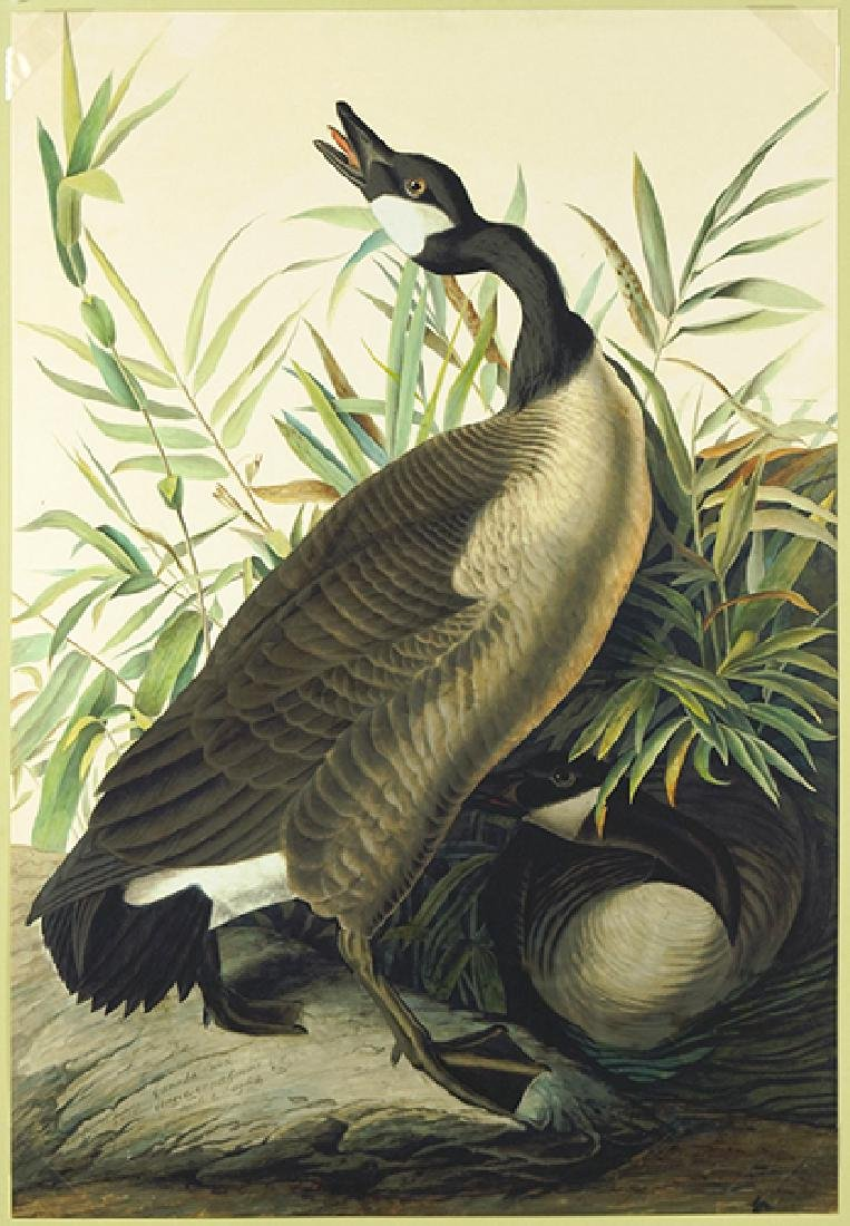 After John James Audubon (American, 1785-1851) Canada