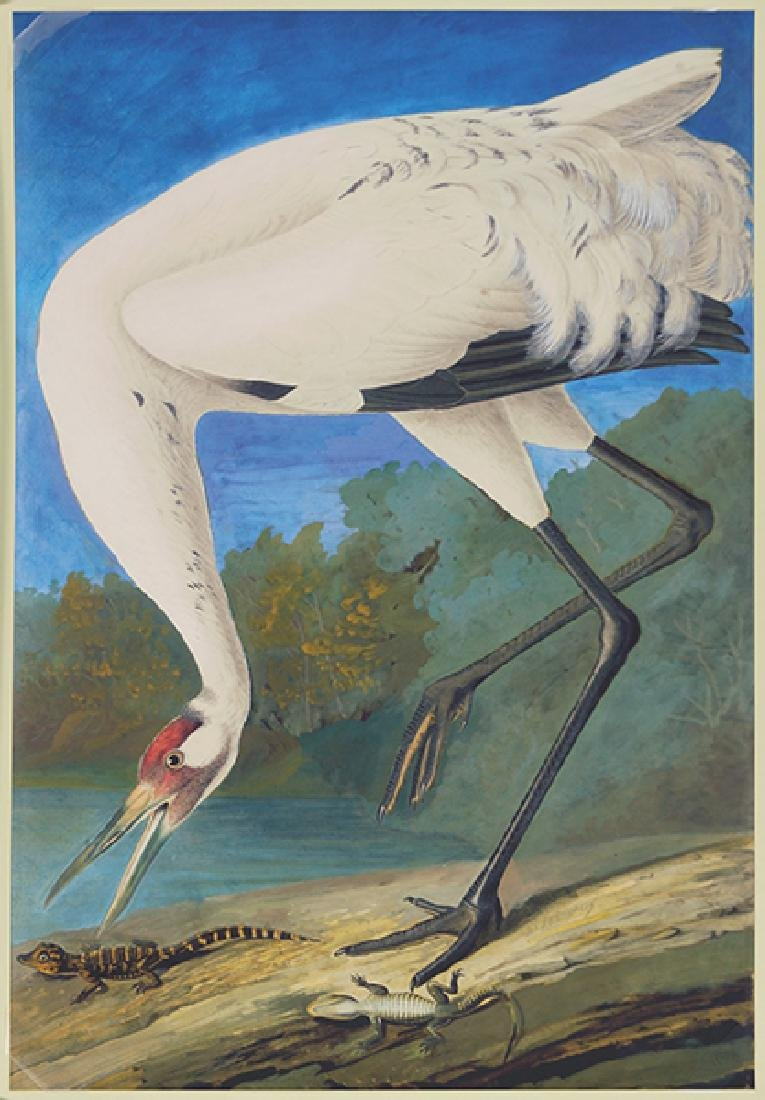 After John James Audubon (American, 1785-1851) Whooping
