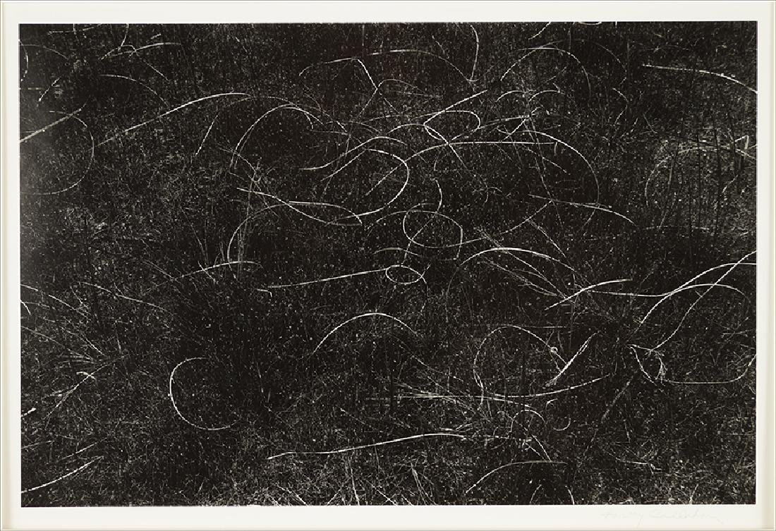 Harry Callahan (American, 1912-1999) Grasses,
