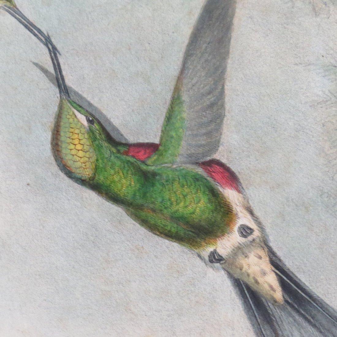 John Gould (British, 1804-1881) Two Hummingbird Prints. - 10