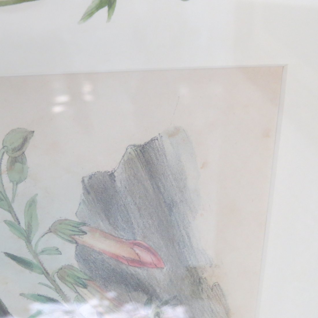 John Gould (British, 1804-1881) Two Hummingbird Prints. - 11