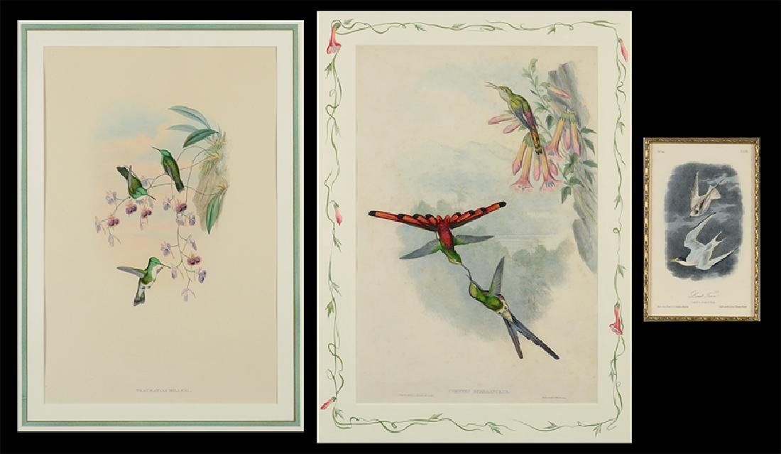 John Gould (British, 1804-1881) Two Hummingbird Prints.