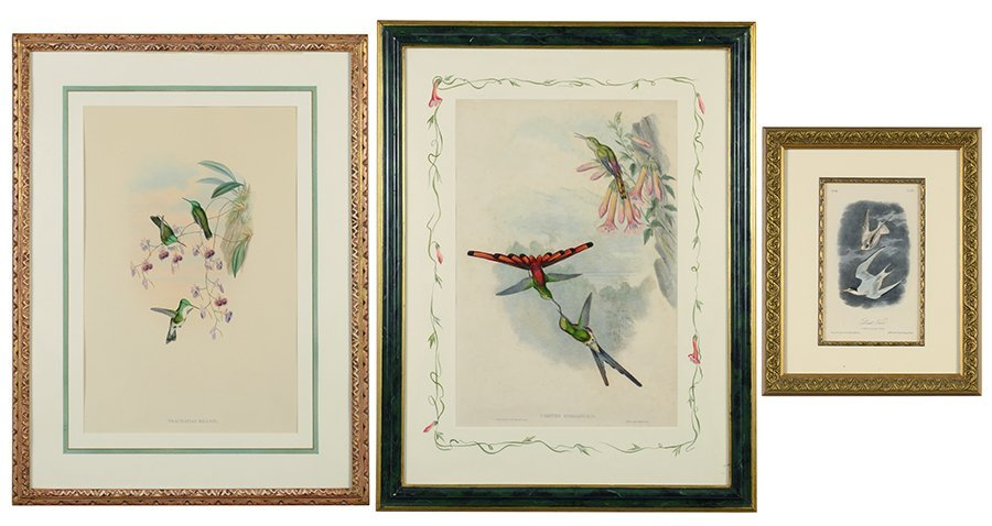 John Gould (British, 1804-1881) Two Hummingbird Prints. - 2