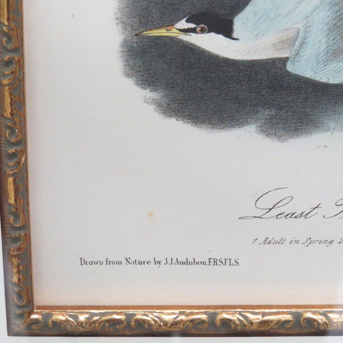 John Gould (British, 1804-1881) Two Hummingbird Prints. - 6