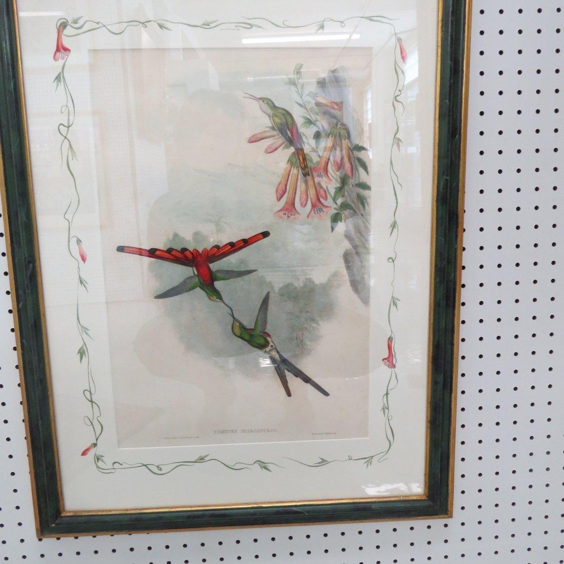 John Gould (British, 1804-1881) Two Hummingbird Prints. - 7