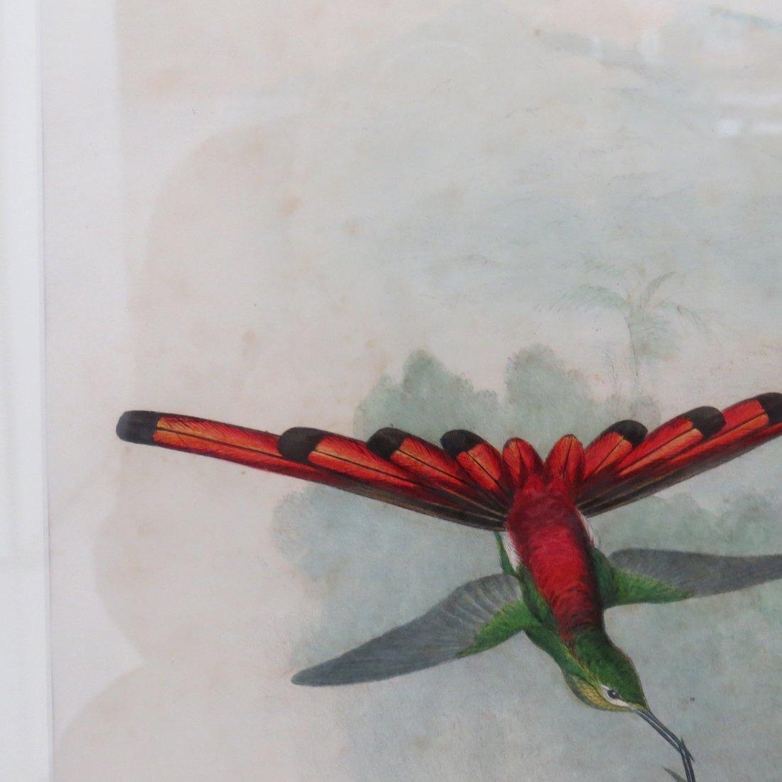 John Gould (British, 1804-1881) Two Hummingbird Prints. - 8