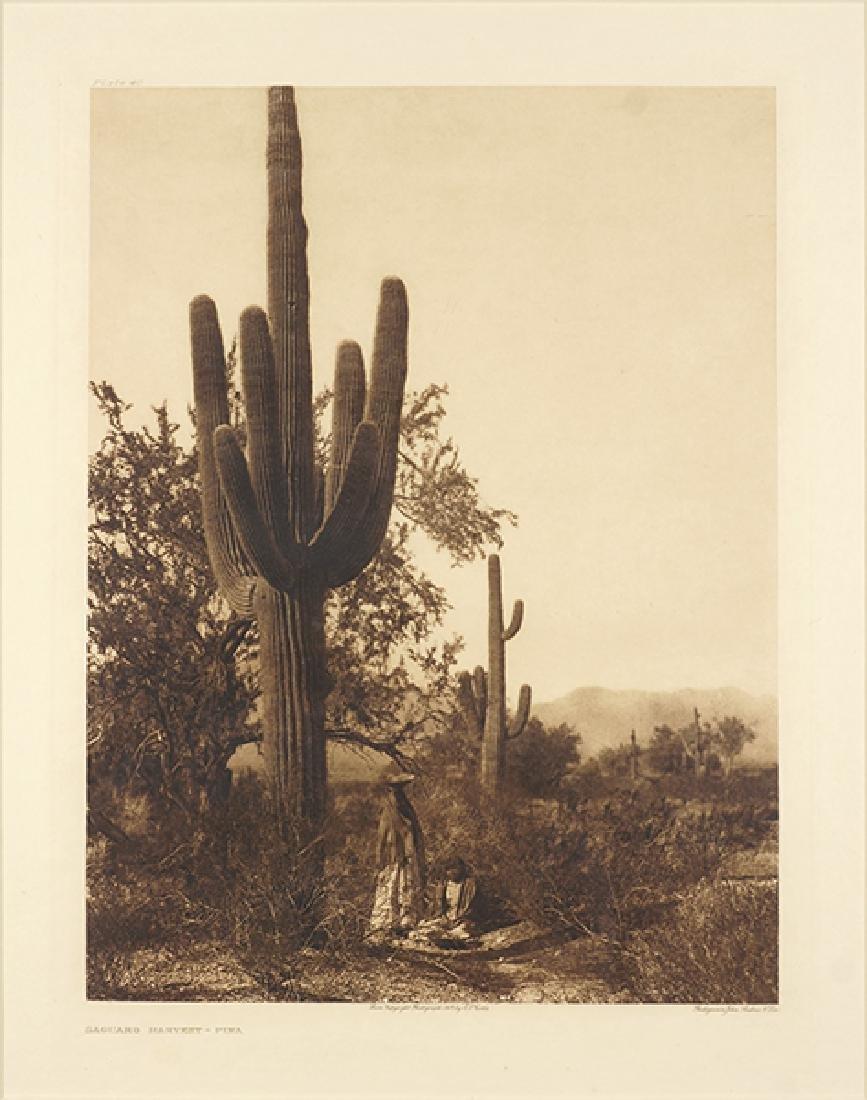 Edward S. Curtis (American, 1868-1952) Saguaro