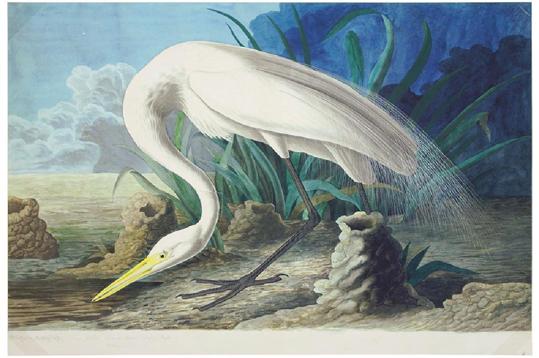 After John James Audubon (American, 1785-1851) White