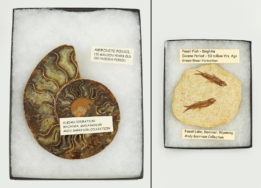 A Bisected Ammonite Fossil Specimen.