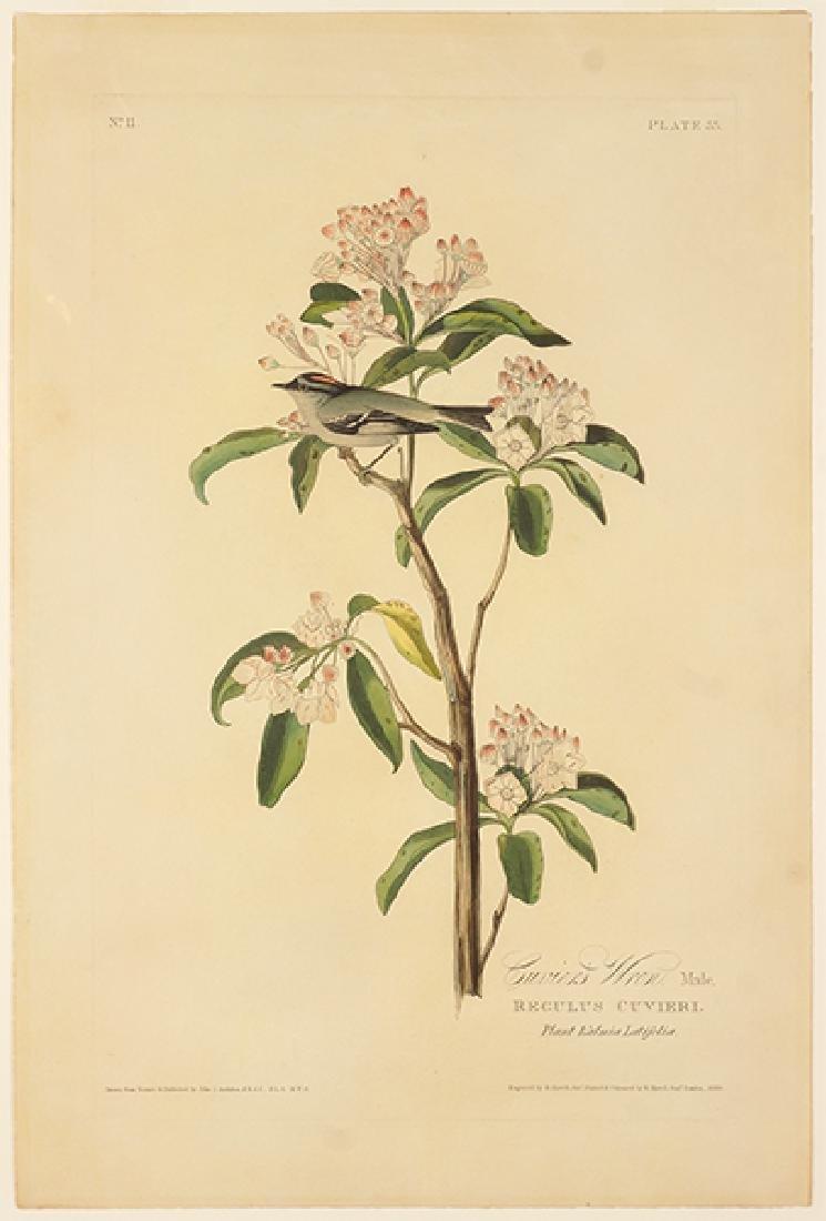 John James Audubon (American, 1785-1851) Cuvier's Wren,