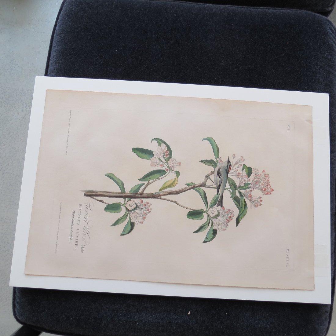 John James Audubon (American, 1785-1851) Cuvier's Wren, - 2