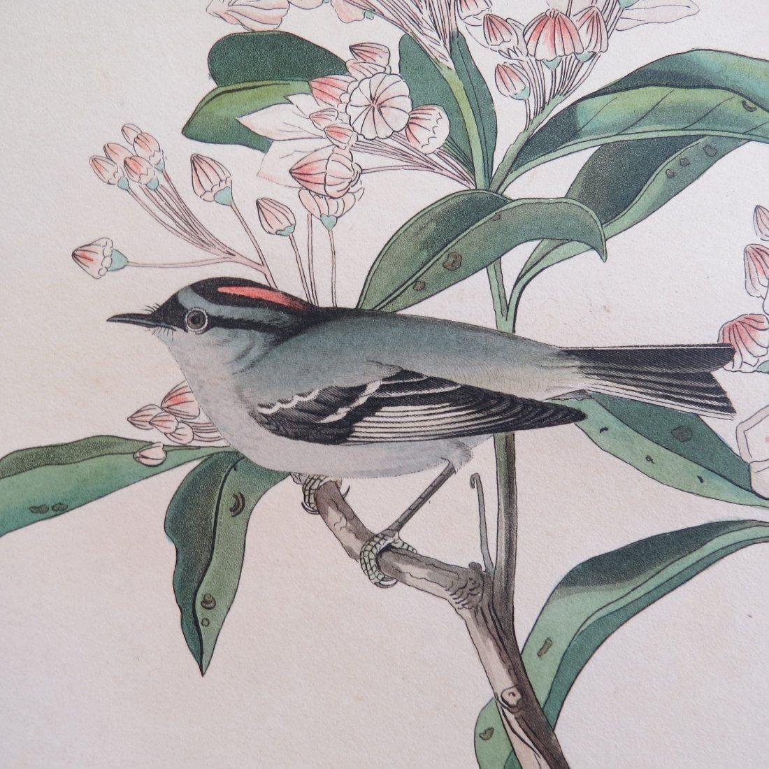 John James Audubon (American, 1785-1851) Cuvier's Wren, - 4