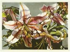 Winifred Godfrey (American, B. 1944) Rubrum Lilies.