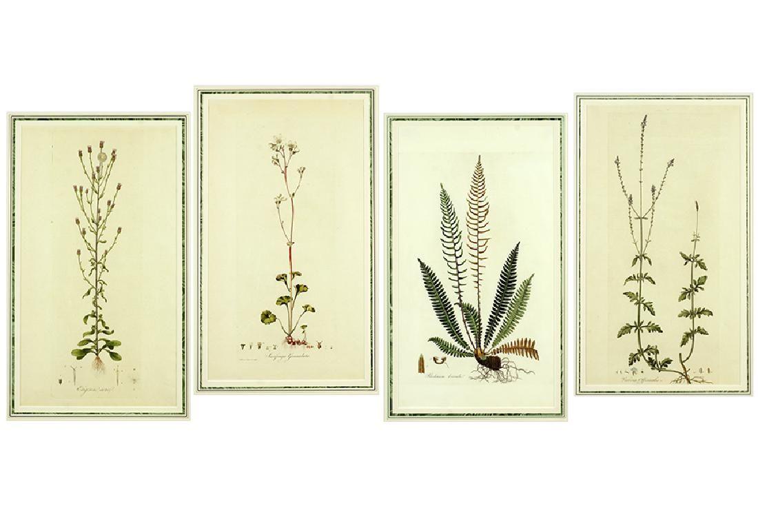 William Kilburn (British, 1745-1818) Four Botanicals.