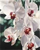 Winifred Godfrey (American, B. 1944) Orchids.