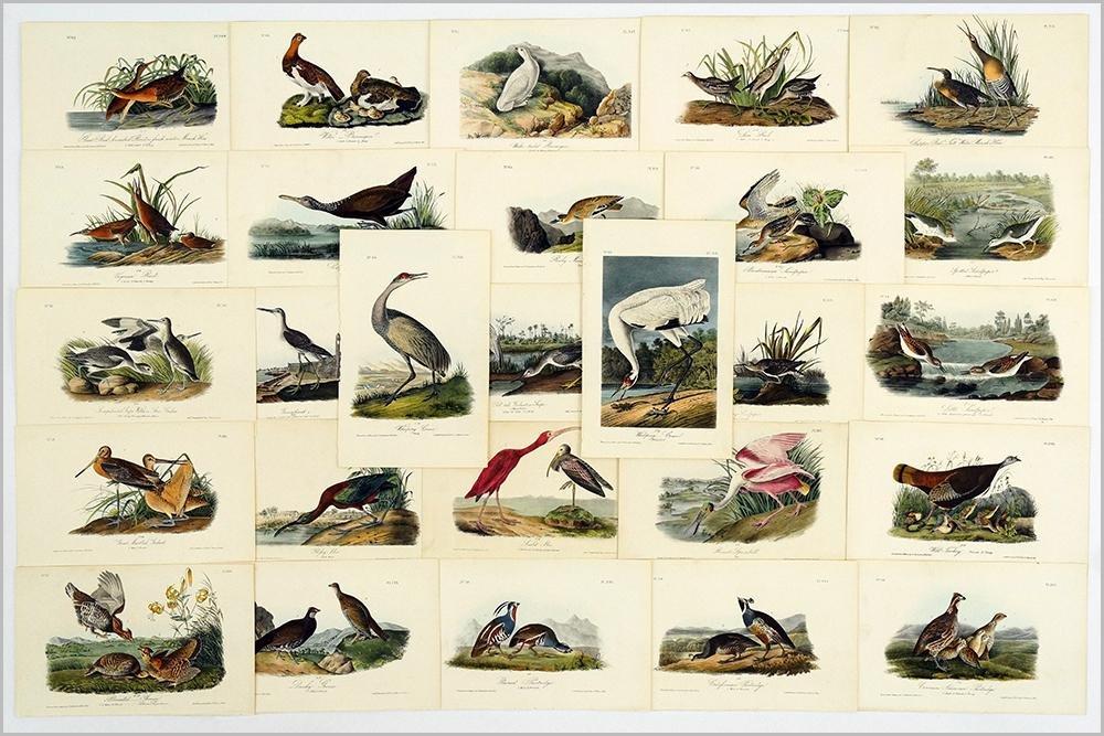 John James Audubon (American, 1785-1851) The Birds of