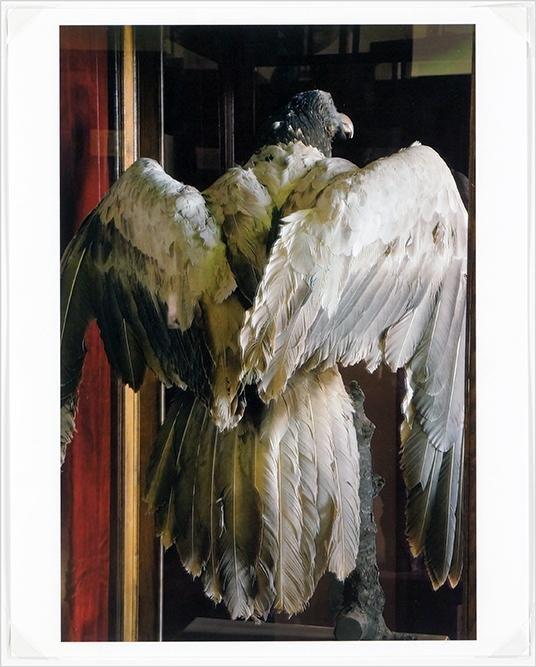 Rosamond Purcell (American, B. 1942) Untitled.