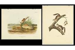 John James Audubon (American, 1785-1851) Two