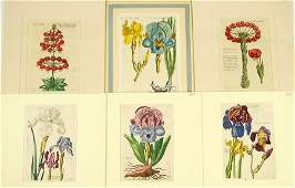 A Collection of Early German Botanical Prints