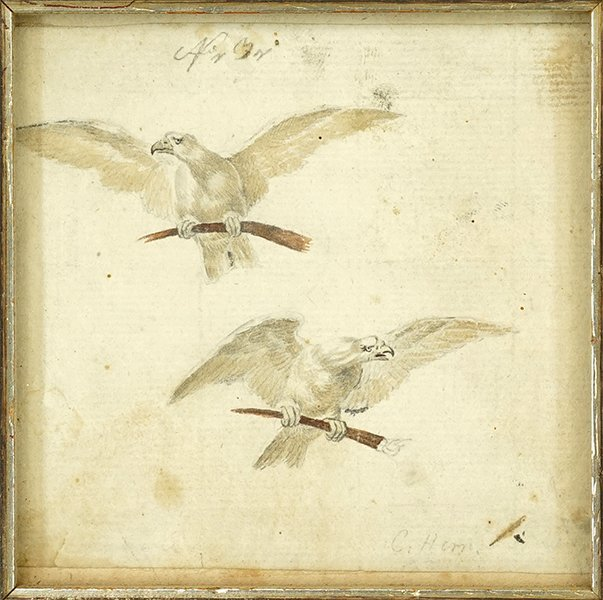 Artist Unknown (18th/19th Century) Two Eagles.